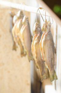 Frisch geräucherte Forellen warten auf ihre Abholung