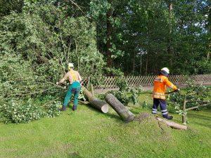 Der erste Baum konnte schnell beseitigt werden.